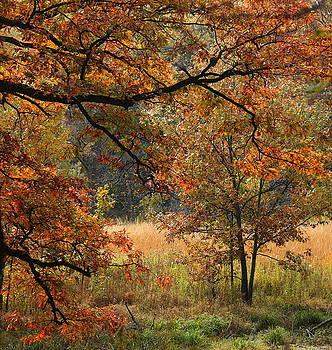 Rosanne Jordan - Autumn Greetings