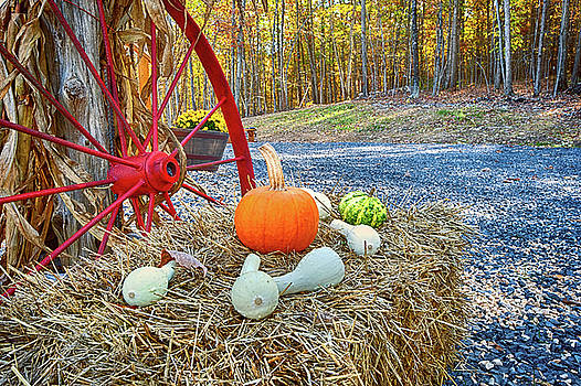Autumn Harvest by Lara Ellis