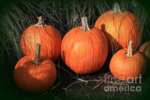 Autumn Harvest - Pumpkins by Dora Sofia Caputo Photographic Design and Fine Art