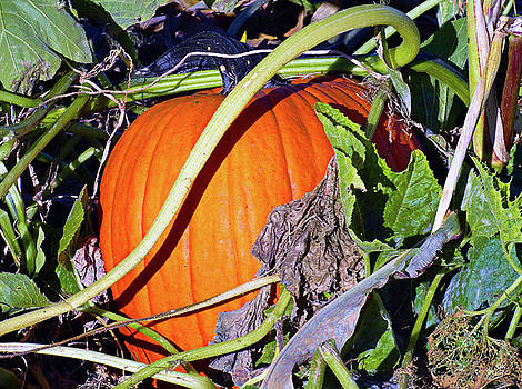 Robert Meyers-Lussier - Autumn Harvest Study 2