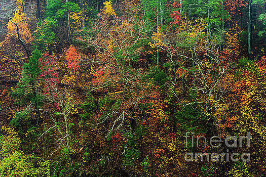Autumn Hillside Blue Ridge Parkway by Thomas R Fletcher