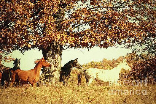 Autumn Horses II by Dimitar Hristov