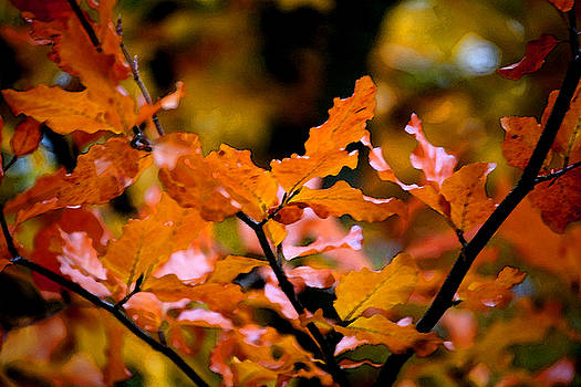 Autumn II by Mary Gaines