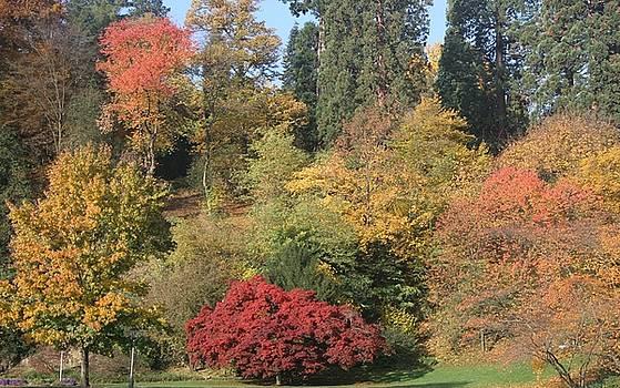 Autumn in Baden Baden by Travel Pics