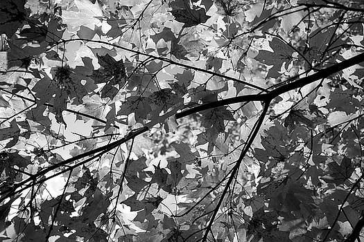 Autumn in Black and White 1 by Angie Tirado