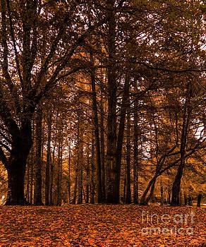 Marc Daly - Autumn in Colligan Wood