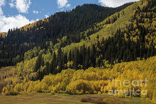 Autumn in Colorado by Timothy Johnson