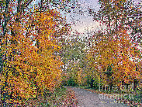 Autumn in East Texas by Charles McKelroy