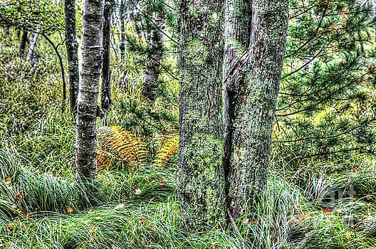 Autumn in forest by Miro Vrlik