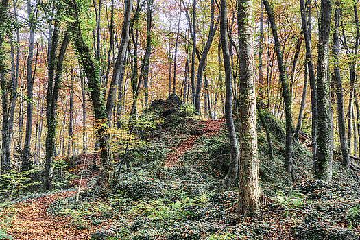 Autumn in Jordan Beech Wood by Marc Garrido