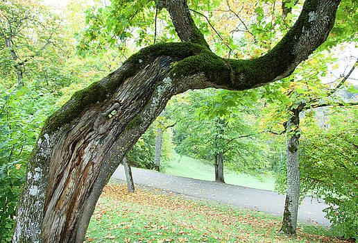 Ramunas Bruzas - Autumn in Latvia