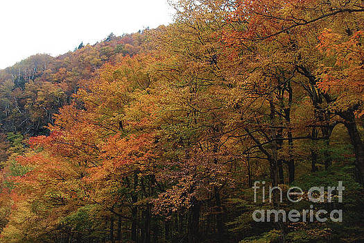 Felipe Adan Lerma - Autumn in Layers - Stowe Vermont