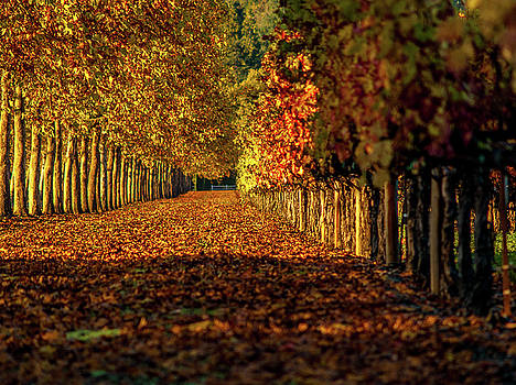 Autumn In Napa Valley by Bill Gallagher