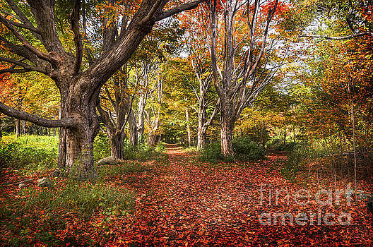 Autumn in Odiorne Park NH by Deena Athans