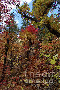 Autumn in Sedona by Frank Stallone