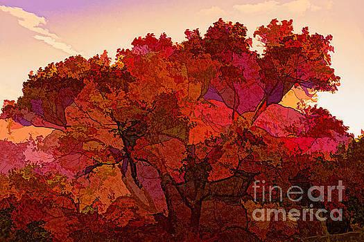 Doug Berry - Autumn in Shenandoah National Park 6961