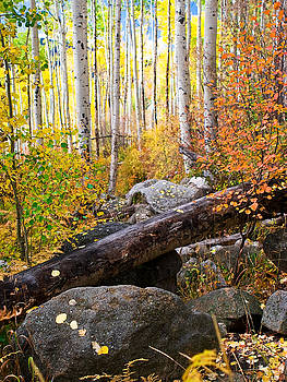Autumn in the Aspens by Mike Hendren