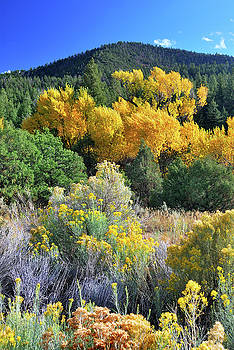 Autumn In The Canyon by Ron Cline