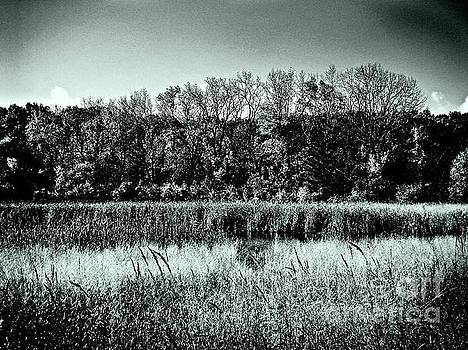 Frank J Casella - Autumn in the Wetlands - Black and White