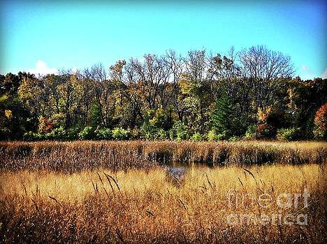 Frank J Casella - Autumn in the Wetlands