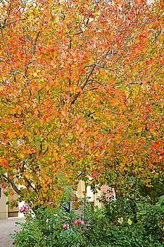 Robert Meyers-Lussier - Autumn Jewels
