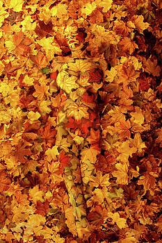 Autumn by Johannes Stoetter