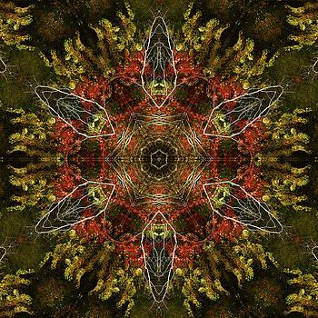 Autumn Kaleidoscope by Cindi Ressler