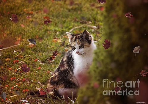 Autumn Kitten  by Nicole Markmann Nelson