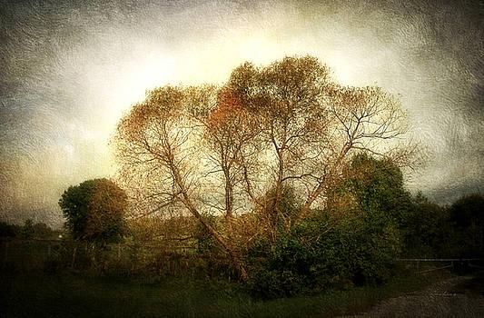 Autumn Landscape by Cynthia Lassiter