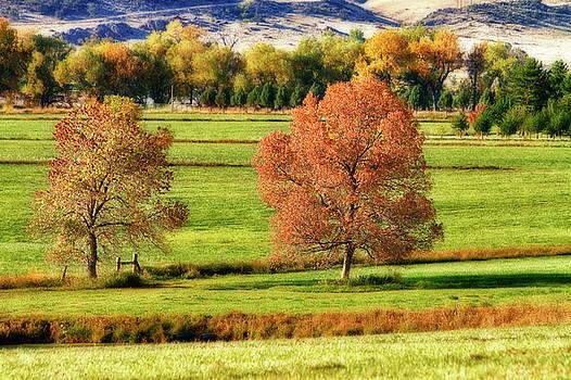 James BO  Insogna - Autumn Landscape Dream