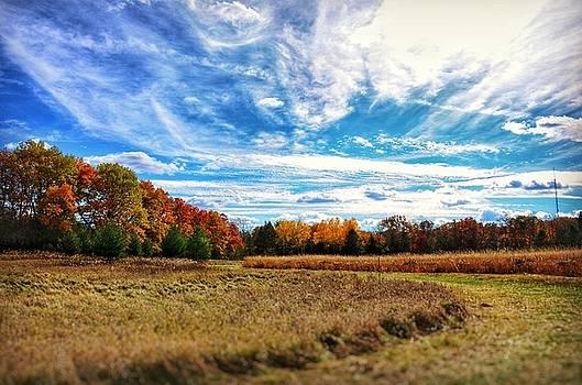 Autumn Landscape by Nikki McInnes