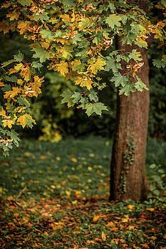 Autumn landscape with orange autumn oak tree in the field by Julian Popov