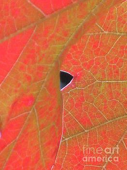 Autumn Leaf 2 by Adrian March