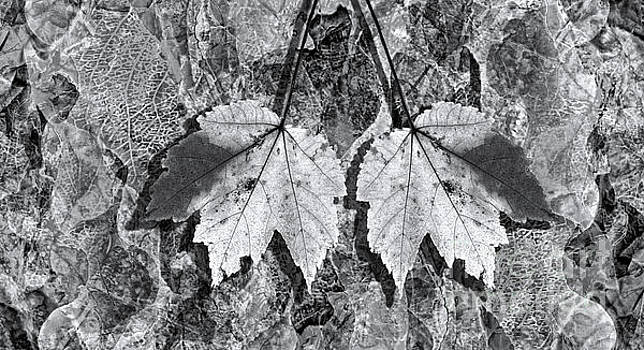 Autumn Leaf Abstract In Black and White by Jeff Breiman