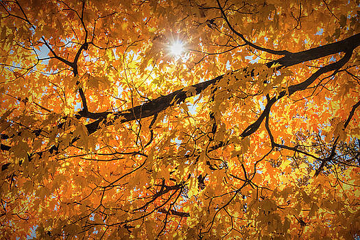 Randall Nyhof - Autumn Leaf Branch with Sun Burst