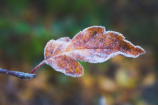 Autumn leaf by Cindy Grundsten