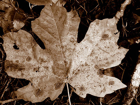 Autumn Leaf by David Crockett