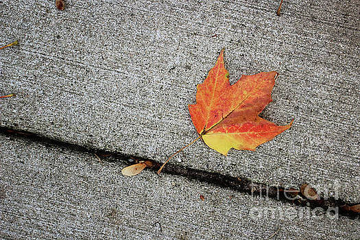 Autumn Leaf by Laura Kinker