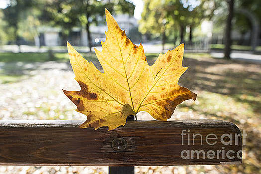 Autumn leaf on a bench in a park by Deyan Georgiev