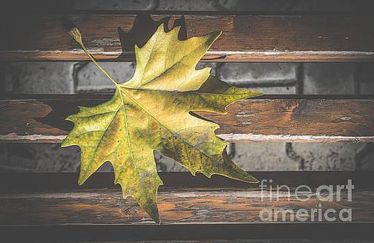 Autumn leaf on sidewalk.  by Deyan Georgiev