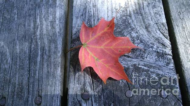 Autumn leaf by Scott Hervieux