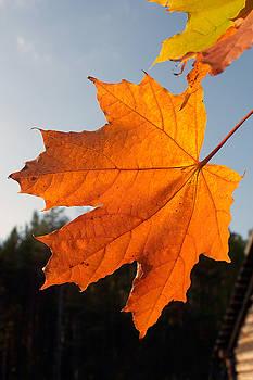 Autumn Leaf by Stanislovas Kairys