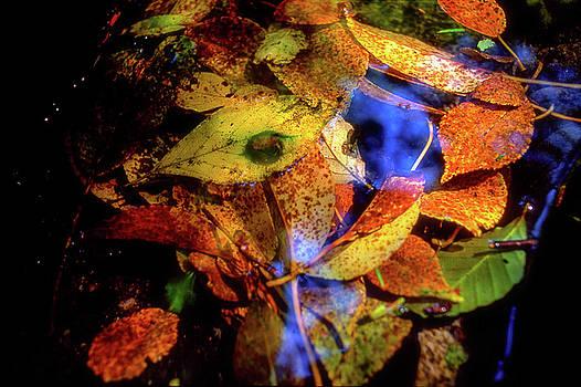 Tatsuya Atarashi - Autumn Leaf