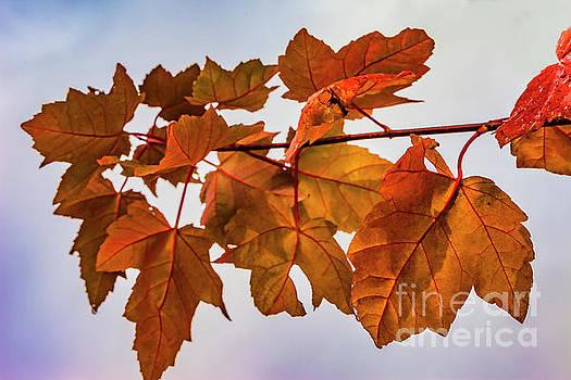 Doug Berry - Autumn Leaves 0530T2