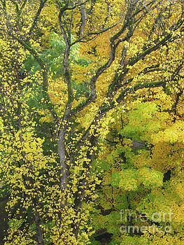 Autumn Leaves 10 by Adrian March