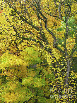 Autumn Leaves 12 by Adrian March