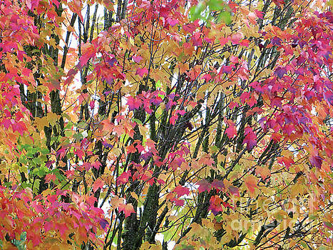 Autumn Leaves 2 by Adrian March