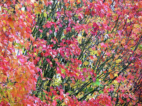 Autumn Leaves 4 by Adrian March