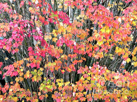 Autumn Leaves 5 by Adrian March