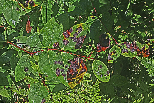 Autumn Leaves 7569  by David Frederick